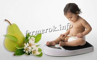 Груша — фрукт: описание, фото, состав, калорийность, полезные свойства