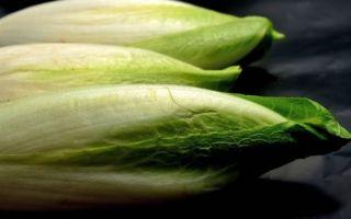 Цикорий: описание, фото, состав, калорийность, полезные свойства