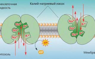 Роль натрия в организме человека, избыток и недостаток натрия