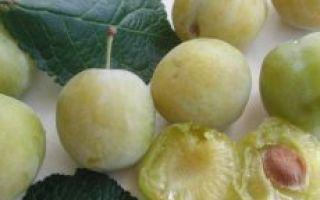 Слива: фото и описание фрукта, состав, калорийность, полезные свойства и вред