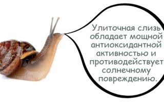 Улитки: состав и полезные свойства