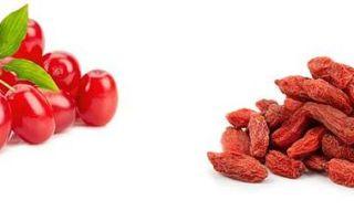 Кизил — ягода: описание, фото, состав, калорийность, полезные свойства