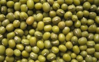 Маш (бобы мунг): состав, калорийность, полезные свойства, применение в кулинарии