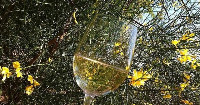 Итальянское игристое вино – изысканная альтернатива французскому шампанскому