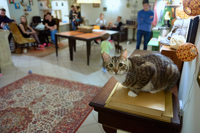 Котокафе в Москве – 5 оригинальных мест для настоящих любителей котиков