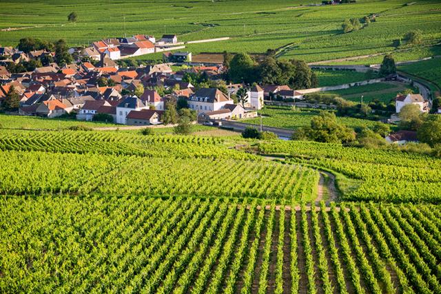 Вина Франции – вводный обзор для путешественника и начинающего сомелье