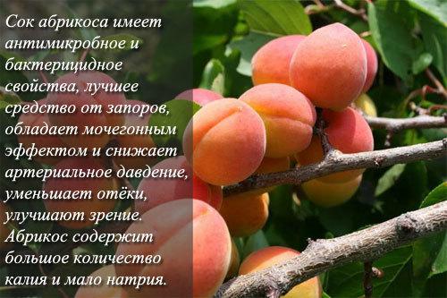 Абрикос: фото и описание фрукта, состав, калорийность, полезные свойства и вред