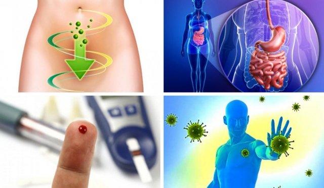 Бузина полезные свойства и применение в народной медицине, фото и описание