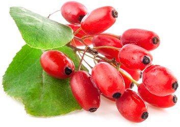 Барбарис: описание, фото, состав, калорийность, полезные свойства ягод