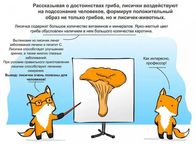 Грибы лисички: польза и вред, описание с фото