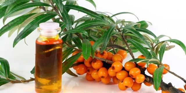 Облепиховое масло польза и вред в медицине и косметологии, какие полезные вещества входят в химический состав