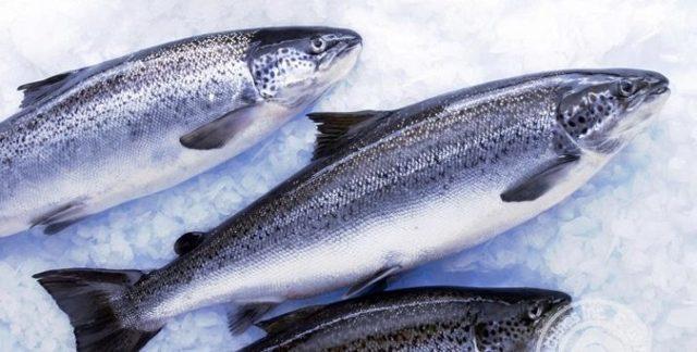 Форель: описание, фото, состав, калорийность рыбы