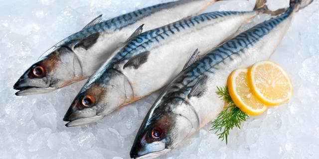 Скумбрия: фото, описание рыбы, состав и калорийность, полезные свойства и вред