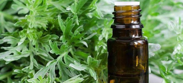 Трава полынь: описание, фото, состав, лечебные свойства