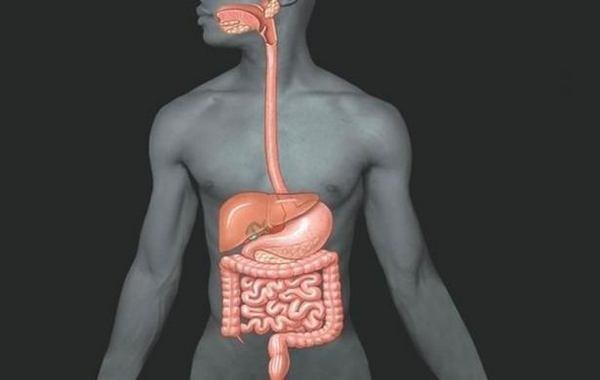 Желудок и режимы питания - физиологические основы, синдром пустого желудка