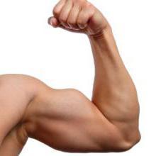 Гейнер: состав, польза и вред, чем отличается гейнер от протеина