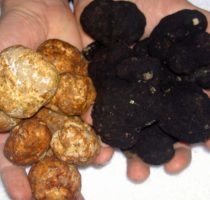 Трюфели черные и белые состав и сорта, как приготовить