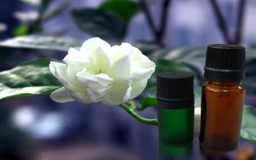 Жасмин: фото, описание, состав, полезные свойства, применение в медицине