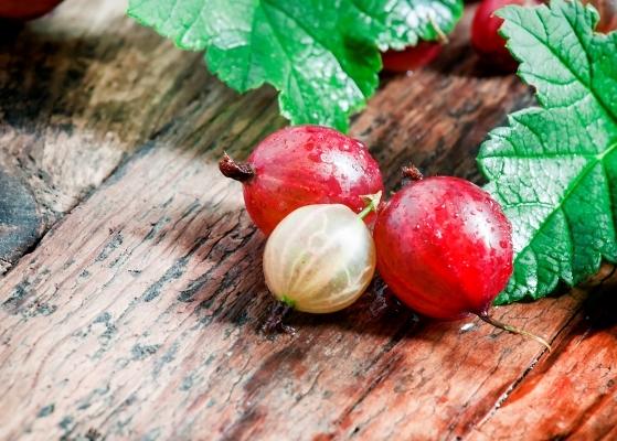 Крыжовник: фото, описание ягоды, состав, калорийность, полезные свойства и вред