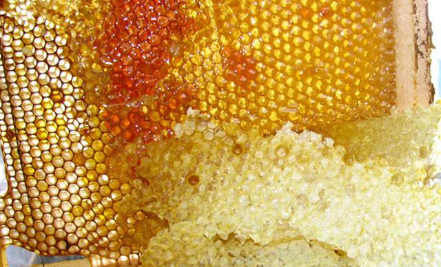 Забрус пчелиный: польза и вред, как его правильно принимать