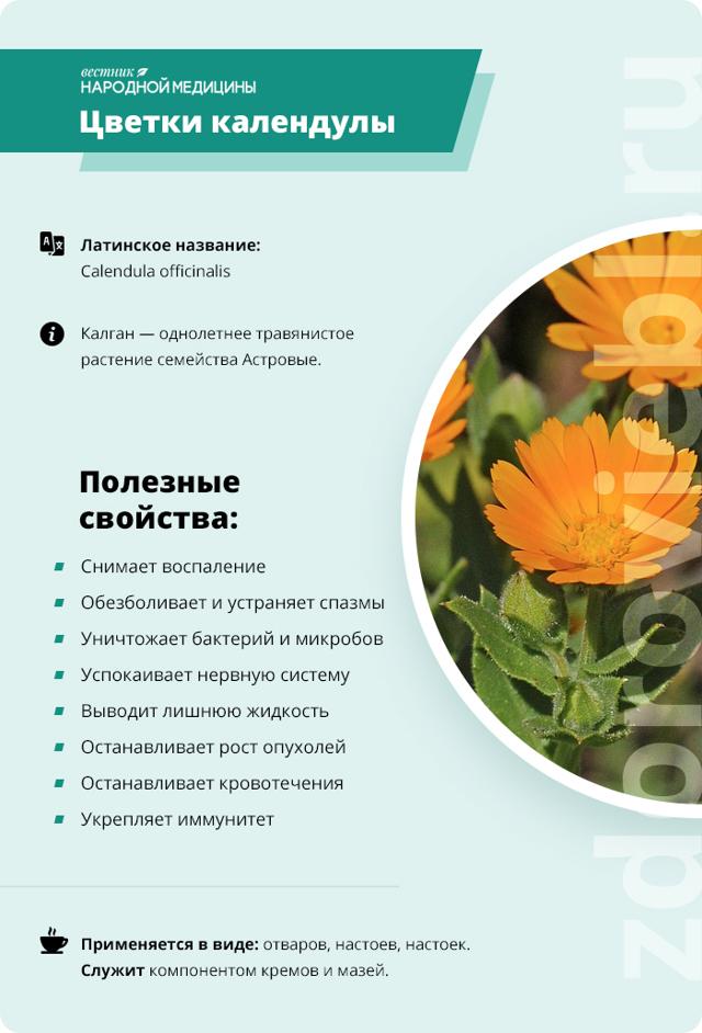 Календула: фото, состав, полезные свойства,применение в медицине