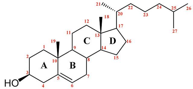 Что такое холестерин: химические и физические свойства