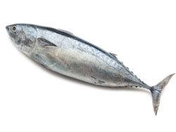 Тунец: фото, калорийность, польза и вред тунца