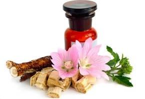 Алтей лекарственный применение полезные свойства при кашле детей, фото описание.