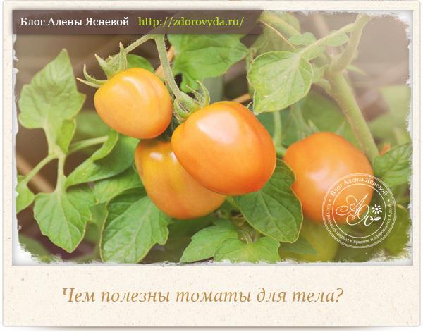 Чем полезны помидоры для пищеварения человека, полезные вещества в составе томатов