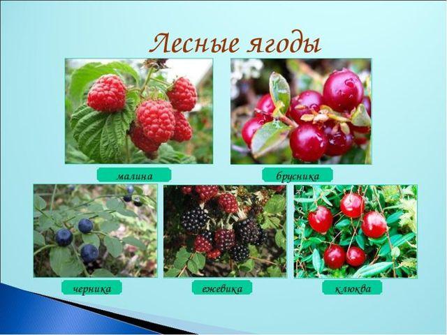 Морошка: фото и описание ягоды, состав, калорийность, полезные свойства и вред