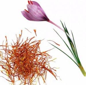 Шафран: фото и описание пряности, состав, полезные свойства и вред