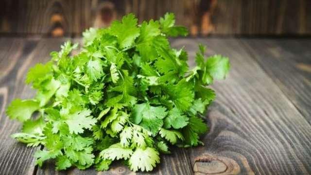 Корень и зелень петрушки полезные свойства для женщин и мужчин, кожи и волос, противопоказания и лечебные свойства