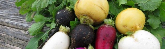 Репа: фото и описание овоща, состав, калорийность