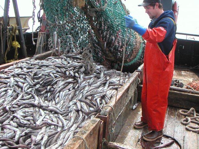 Хек или Мерлуза: описание рыбы, фото, состав, калорийность, полезные свойства