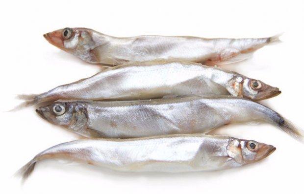 Мойва: фото и описание рыбы, состав, калорийность, полезные свойства мяса