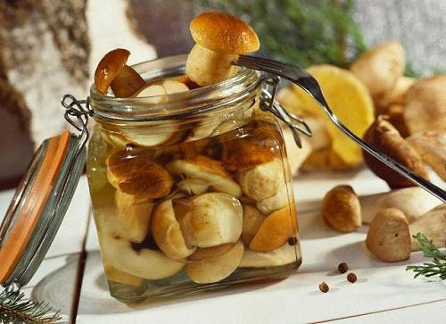 Белый гриб полезные свойства, как приготовить