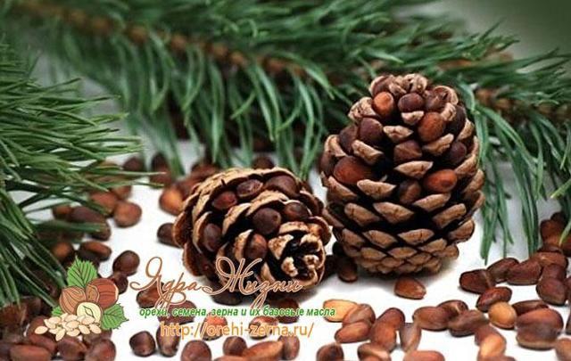 Кедровый орех: фото и описание, состав, калорийность: полезные свойства и вред