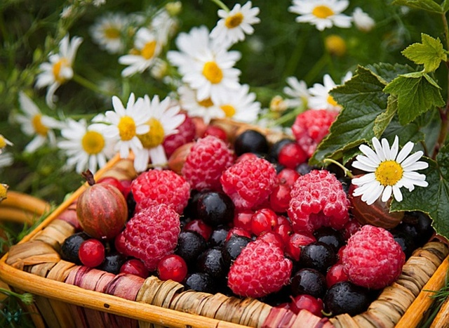 Виды и классификация фруктов, их отличие от ягод