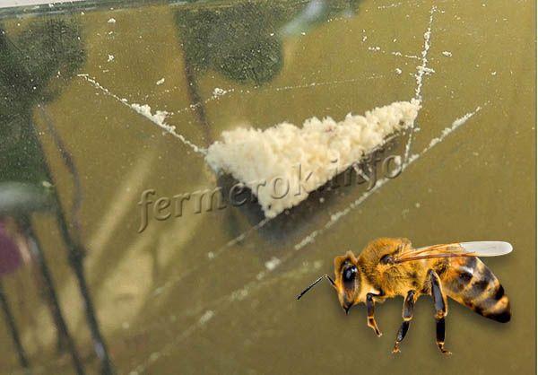 Пчелиный яд: состав, польза и вред, лечение и инструкция по применению
