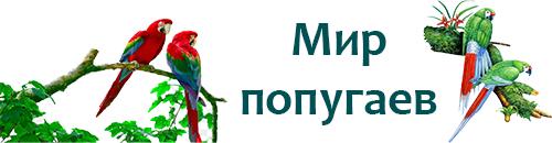 Чумиза: описание, состав и свойства, применение чумизы