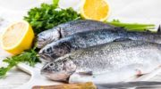 Мидии: фото, описание морепродукта, состав, калорийность, полезные свойства и вред мяса