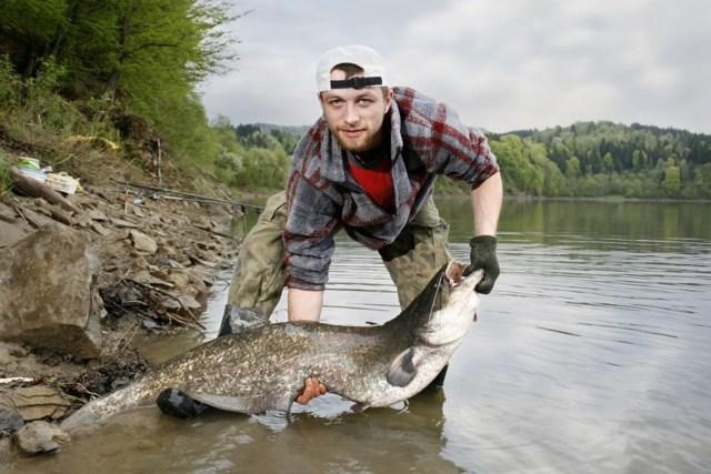 Сом: фото, описание рыбы, состав и калорийность