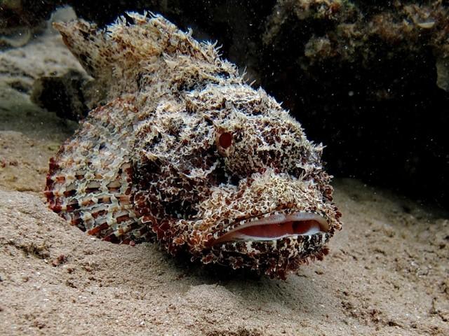 Необычные ядовитые и съедобные виды рыб