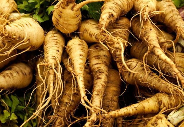 Лекарственное растение пастернак польза и вред для дыхания и пищеварения