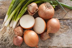 Репчатый и зеленый лук польза и вред для пищеварения и кровеносной системы