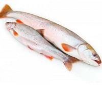 Язь: фото и описание рыбы, состав, калорийность, полезные свойства