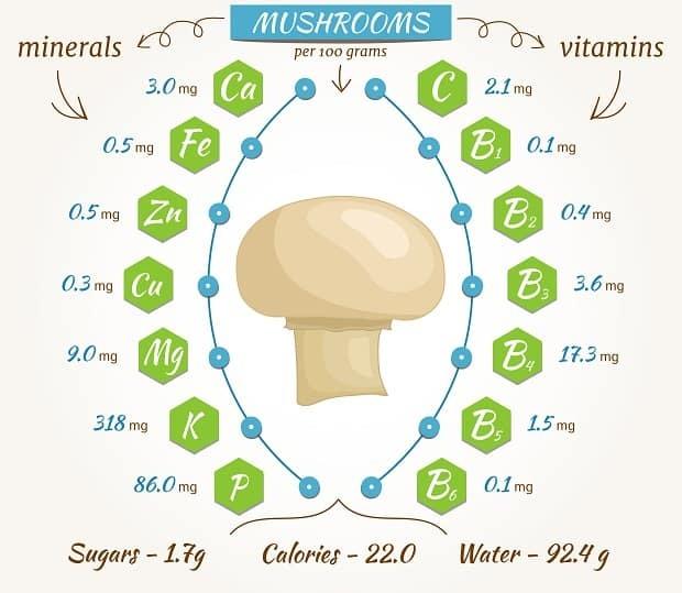 Грибы шампиньоны - сырые и консервированные, польза и вред