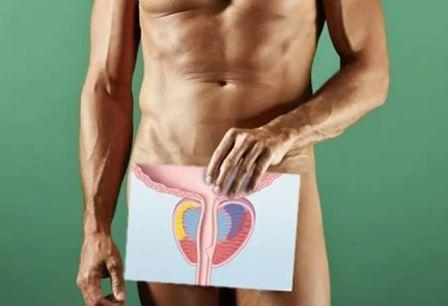Малина: полезные свойства, вред и противопоказания, чем полезна для мужчин и женщин