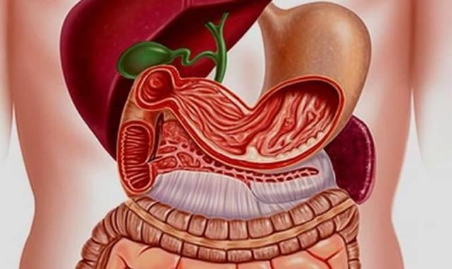 Переваривание мяса в организме человека: ферменты и время переваривания