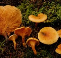 Виды грибов: съедобные и несъедобные